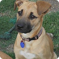 Adopt A Pet :: PEACHES - Torrance, CA