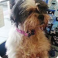 Adopt A Pet :: Mabel - Vista, CA
