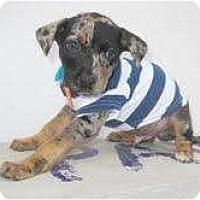 Adopt A Pet :: Zippy - Richmond, VA