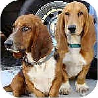 Adopt A Pet :: Monroe & Putnam - Phoenix, AZ