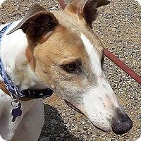 Adopt A Pet :: Ed Henry - Tucson, AZ