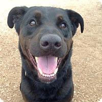 Adopt A Pet :: King - Austin, TX