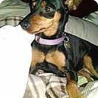 Adopt A Pet :: Louise - Columbus, OH