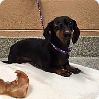 Adopt A Pet :: Matilda - Marcellus, MI