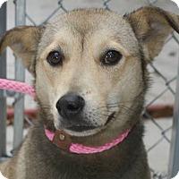 Adopt A Pet :: Sally - Washington, DC