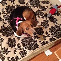 Adopt A Pet :: Skye - Dumfries, VA
