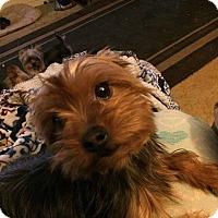 Adopt A Pet :: Rebel-pending adoption - Manchester, CT