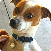 Adopt A Pet :: RYLEY - Terra Ceia, FL