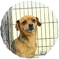 Adopt A Pet :: Minnie - Las Vegas, NV