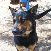 Adopt A Pet :: Oso - Las Vegas, NV