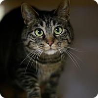 Adopt A Pet :: Kele - Kettering, OH