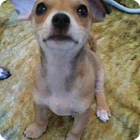 Adopt A Pet :: Kauai - Meridian, ID