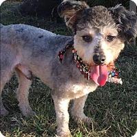 Adopt A Pet :: Mugsy - Encino, CA