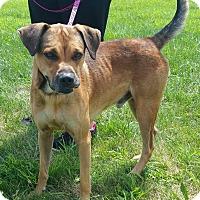 Adopt A Pet :: Sam - Lisbon, OH