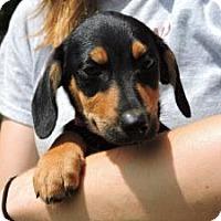 Adopt A Pet :: Eliza - Berkeley Heights, NJ