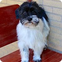 Adopt A Pet :: Murphy - Munster, IN