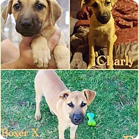 Adopt A Pet :: Charly - DeForest, WI