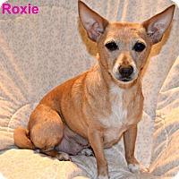 Adopt A Pet :: Roxie - Yreka, CA
