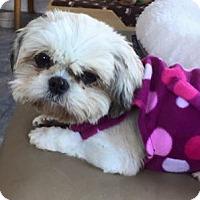 Adopt A Pet :: Candy - Honeoye Falls, NY