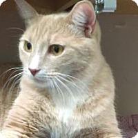 Adopt A Pet :: Charlie - Parma, OH