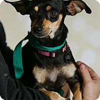 Adopt A Pet :: Chelsea - Princeton, MN