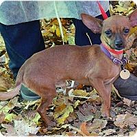 Adopt A Pet :: Calvin - Huntington, NY