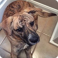 Adopt A Pet :: Buster - Houston, TX