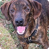 Adopt A Pet :: Mistle - Adoption Pending - Congrats Jill! - Baltimore, MD