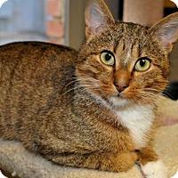 Adopt A Pet :: Romeo - Tulsa, OK