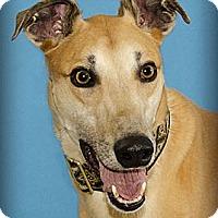 Adopt A Pet :: Jayvee - Seattle, WA