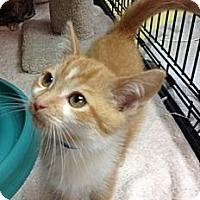 Adopt A Pet :: Orson - Byron Center, MI