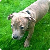 Adopt A Pet :: Monica - Southampton, PA