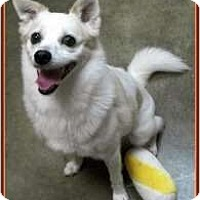 Adopt A Pet :: Noogie (Courtesy listing) - Richmond, VA