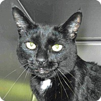 Adopt A Pet :: Popo - Tinton Falls, NJ