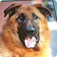 Adopt A Pet :: SEMPER Von stanna - Los Angeles, CA