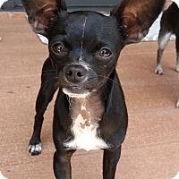 Adopt A Pet :: Tillman - Dayton, OH
