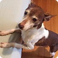 Adopt A Pet :: Rudy - ROME, NY