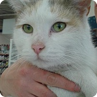 Adopt A Pet :: MOM POLYDACTO - Ridgewood, NY