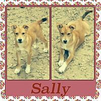 Adopt A Pet :: Sally Adoption pending - East Hartford, CT