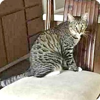 Adopt A Pet :: Jema - Davis, CA