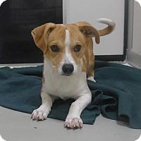 Adopt A Pet :: Pork Chop - Manning, SC
