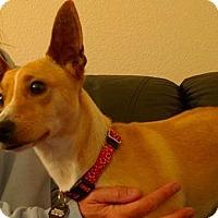 Adopt A Pet :: *BENNY - Sacramento, CA