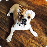 Adopt A Pet :: Betsy - Buffalo, NY