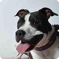 Adopt A Pet :: FIONA - Ukiah, CA