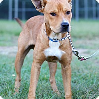 Adopt A Pet :: Red - Waldorf, MD