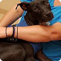 Adopt A Pet :: Rosie - Ft. Lauderdale, FL