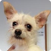 Adopt A Pet :: Whitey - Canoga Park, CA