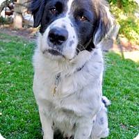 Adopt A Pet :: Moonlight - Salt Lake City, UT