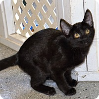 Adopt A Pet :: Lester - Michigan City, IN