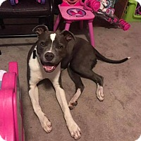 Adopt A Pet :: Luke - Broken Arrow, OK